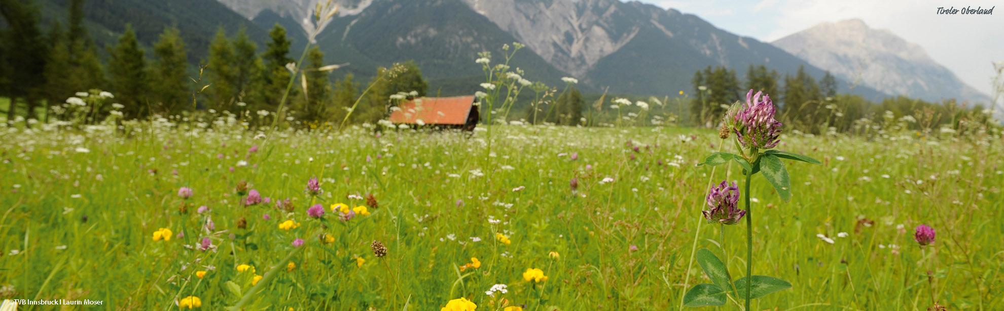 OTVB-Innsbruck_2011_872_Laurin-Moser_Tirol-Oberland